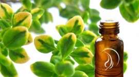 Thyme Oil Benefits